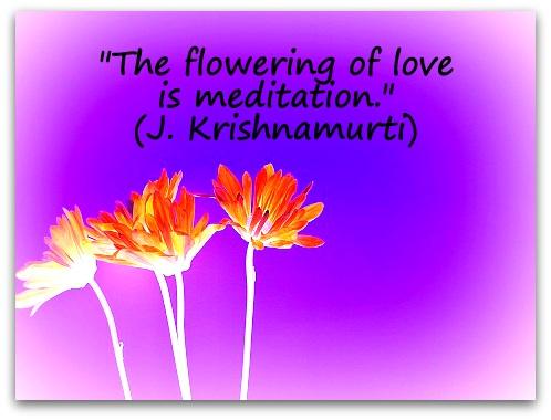 """The flowering of love is meditation."" (J. Krishnamurti)"