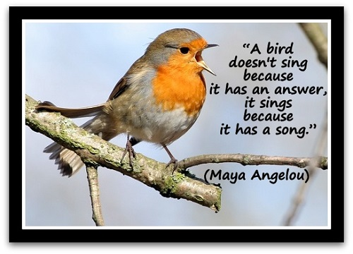 """A bird doesn't sing because it has an answer, it sings because it has a song."" (Maya Angelou)"