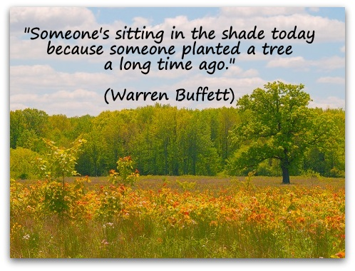Someone Sitting a Long Time Ago in a Tree Planted the Shade Today Because Someone's