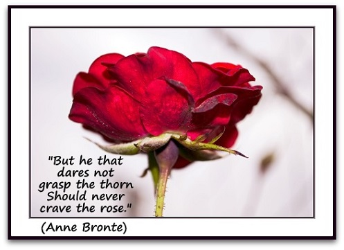 Anne Bronte rose quote